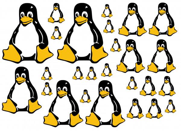 Maxi-Sticker - Pinguin A4 Nr.2